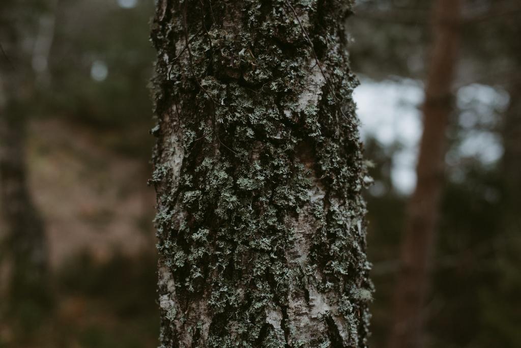 ELOPEMENT-PHOTOGRAPHER-SCOTLAND-LOCH-AN-EILEIN-203