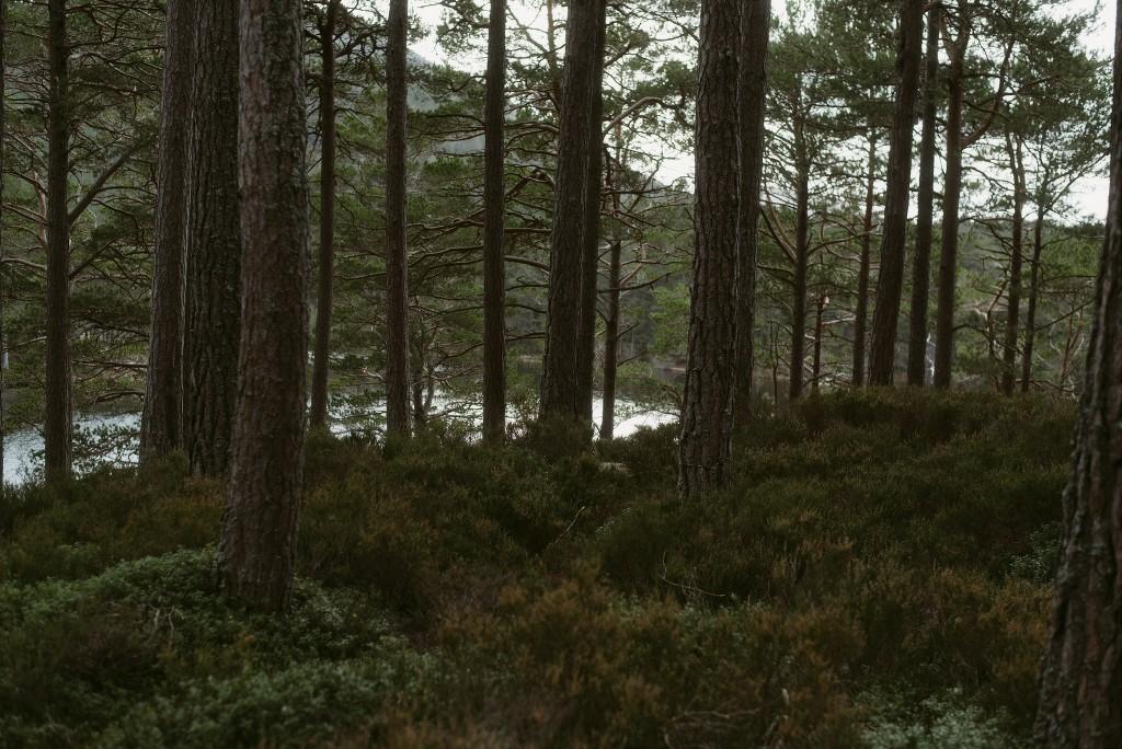 ELOPEMENT-PHOTOGRAPHER-SCOTLAND-LOCH-AN-EILEIN-291